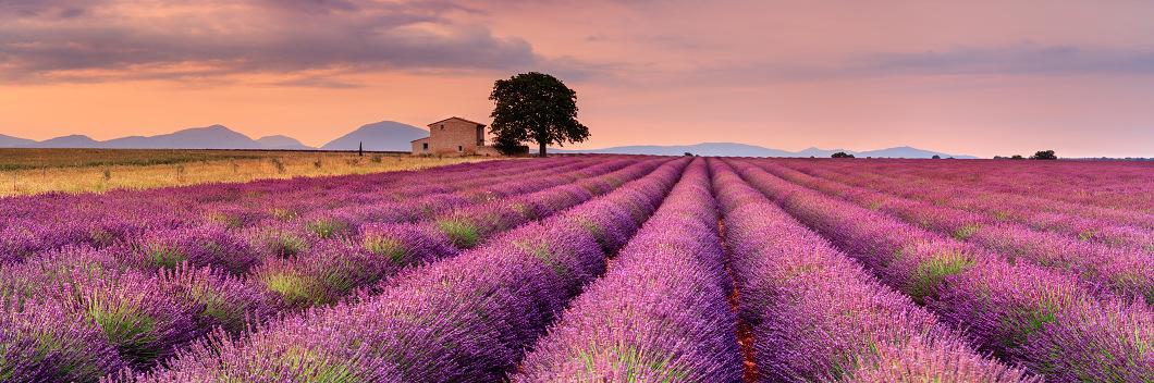 Zájezd do Provence